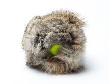 """Rabbit """"Cover"""" s tenisovým míčem"""